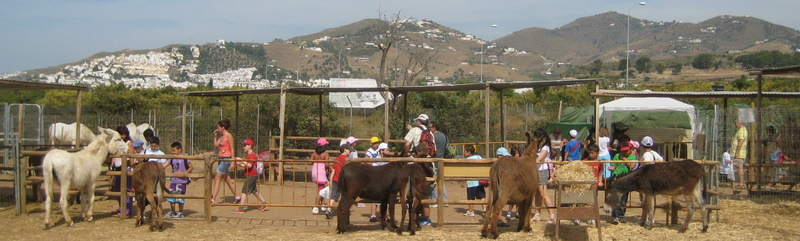 Nerja Donkey Sanctuary - one of the best animal charities on the Costa del Sol