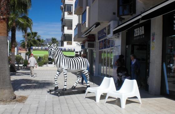 zebra fashion zebra (560x365)